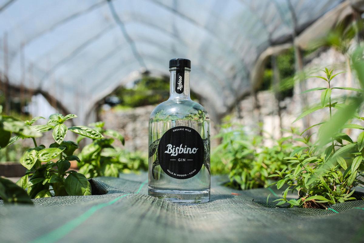 Gin Bisbino - FAVON.IO